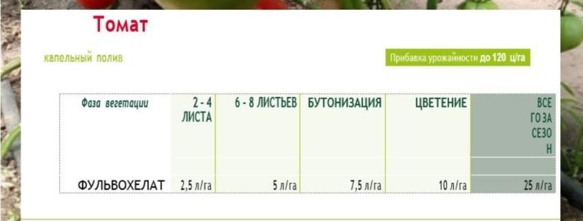 Секрет здоровых томатов.